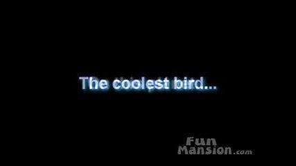 Интересна Птица, Яко Dance.
