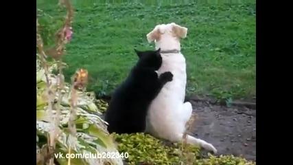 Коте масажист [смях]