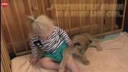 Бебе лъв живее с момиченце и нейното семейство, Австралия
