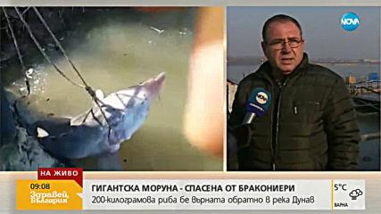 200 килограмова моруна беше спасена от ръцете на бракониери
