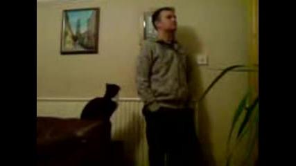 Котката Жадува За Внимание