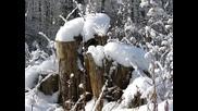 Шаро и първият сняг