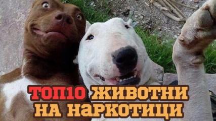 Животни, които взимат наркотици