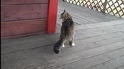 Котка тича като игриво конче ...
