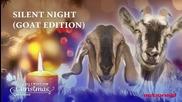 Silent Night (Goat Edition)