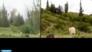 Нло. Пришълци: - Бягайте крави, бикове и теленца!!!