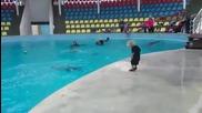 Дете и делфин... просто играят един с друг