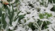 Снежна, априлска пролет в Разград