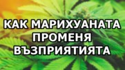 5 начина, по които марихуаната променя възприятията