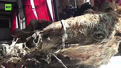 1,500-Year-Old Mummy Found Wearing 'Adidas' in Mongolia