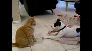 Котка Си Играе С Куче