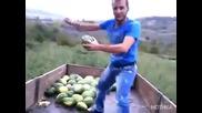 В Албания вече почват да танцуват кючек докато товарят дините в камиона