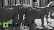 За втори път се роди слонче в белгийски зоопарк, но има опасност за живота му