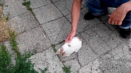 20150714 коте от Казанлък