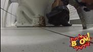 Епическа шега - бразилец пръска с ла*на другите в кенефа - много смях
