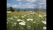 Частица от уникалността на българската природа в нейния автентичен вид