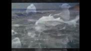 Стефан Воронов и Маргарита Радинска - Романтични времена ( Авторско Видео )