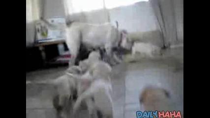 Армия От Преследващи Кученца