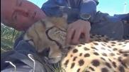 Pokud se vm na tom nco nezd, tak gepardi se daj v podstat ochoit ped...527031110783550