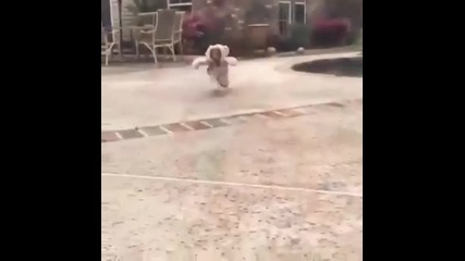 Куче сладур с дрешки прилича на мече
