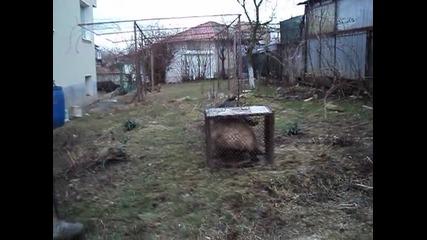 Юле в.д. Фуксвийзе