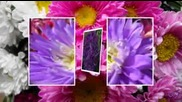 Хубав ден с есенни цветя - Happy Day Beautiful Autumn Flowers - Saxophon music