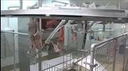 Роботизиран цех преработва месо ,без човешко участие!