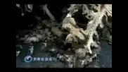 Катастрофа на Ту - 154 в Машхад, Иран 24.01.2010