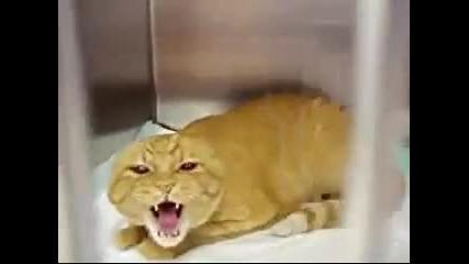 Мяу - Мяу Малко котенце