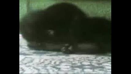 World Wrestling Cat Federation