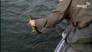 Риболовът на щука никога не е скучен