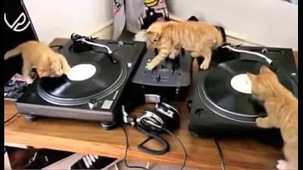Три котета диджеи