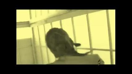 - Убиец Фен Видео на Анелия - Готов ли си