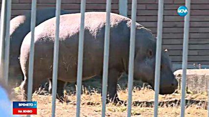 Как се разхлаждат животните в летните жеги?