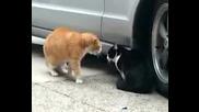 Котки говорят :d много смях