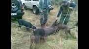 ловците на с.ковачевци