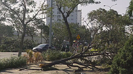 Vietnam: Fallen trees block roads in Da Nang as clean-up underway in wake of Typhoon Molave