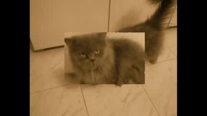 Моята Котка 2
