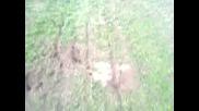 Tilki Ini Super Inceleme 2014 Hd