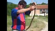 """Snake, Zmia, Р""""рѕр»сџрјр° Р·рјрёсџ, Big, wild"""