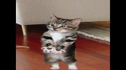 Песнички За Котенца