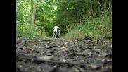 Downhill град Провадия - Trailer !