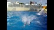 Aqua park Paradise