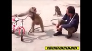 Никога не се опитвай да накараш маймуна да спре цигарите