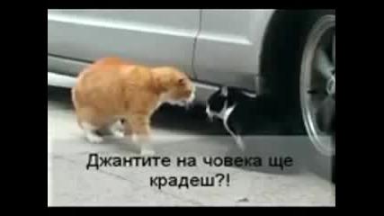 Котки се карат + субтитри на бг. (смях)