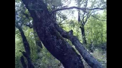 Планините около с.просеник