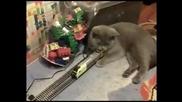 Котка непукист ( смях )