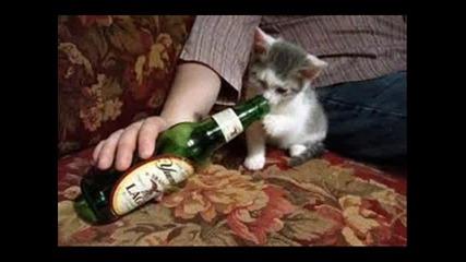 снимки на котенца!!!