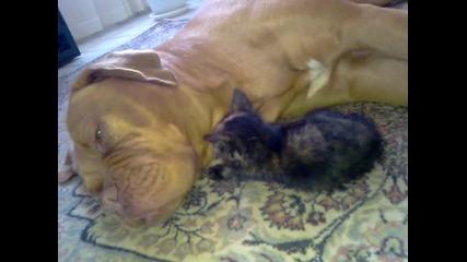 Dog Chloe & Cat Sofi