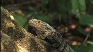 Заслужава си! Пълен релакс сред природата на Коста Рика...